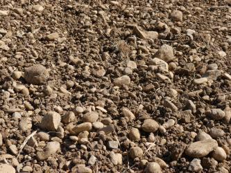 Nahaufnahme eines braunen Ackerbodens, auf dem zahlreiche kleine und größere Steine verteilt sind.