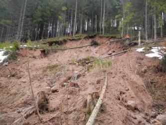Das Bild zeigt große Mengen an Schlamm mit einigen Gesteinsbrocken, die sich über einen Hang erstrecken. Darin sind auch einige umgerissene und abgeknickte Bäume zu erkennen. Am oberen Bildrand zeigt sich eine Abrisskante, darüber einige Nadelbäume.
