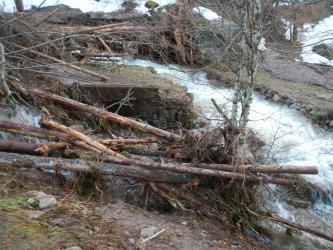 Das Bild zeigt einen stark angeschwollenen Bach, der eine steinerne Wegüberfahrt durchbrochen hat. Im Vordergrund liegen mehrere Baumstämme, die sich an einer Birke verkeilt haben. Auch im Hintergrund ragen mitgerissene Äste, Gestrüpp und Stämme ins Bild.