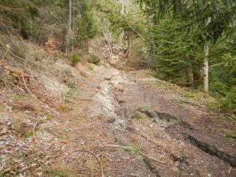 Man blickt auf einen Forstweg, der rechts und links von Nadelbäumen gesäumt ist. Der Weg liegt an einem Hang. Auf dem Weg sind deutliche Risse im Boden zu erkennen und er ist leicht abgerutscht.